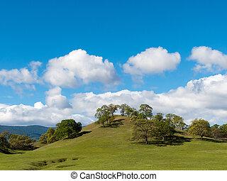 Spring oak trees