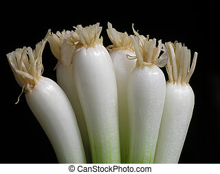 Spring onion against black background