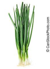 Spring Onion on White backgorund