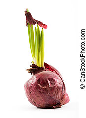 Spring onion over white background