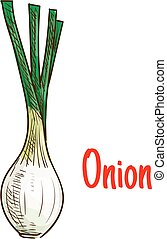 Spring onion vegetable with green leaves sketch - Green...