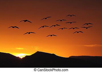Spring or autumn migration of birds