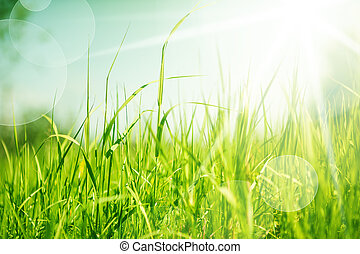 abstract nature background with grass - Spring or summer ...