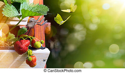 Summer fruit background; fresh  Strawberry on a green garden background
