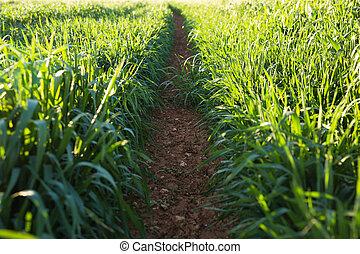 spring or summer green grass in sun light background