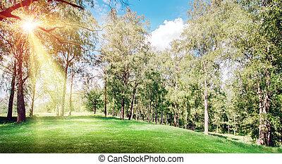 Spring park landscape