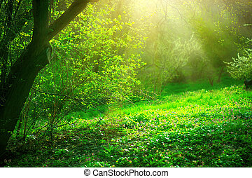 Spring park with green grass and trees. Beautiful nature landscape