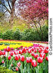 Spring park with multicolor tulips. Keukenhof garden, Netherland