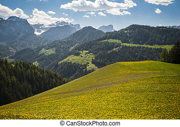 Spring pastures in Dolomite Mountains of northern Italy