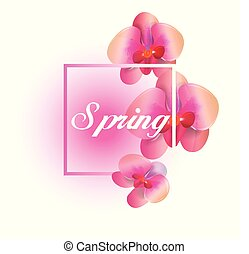 Spring Pink Orchid White Background Vector Image