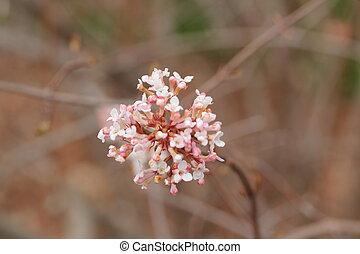 Spring Pink & White Cherry Blossom
