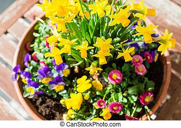 Spring plant arrangement in flower pot