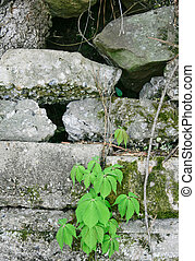 Spring Plant & Weathered Block Wall #2
