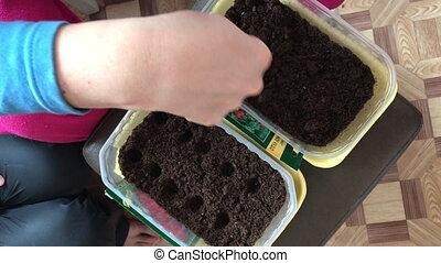 Spring planting seeds for seedlings. Woman loosens her hands...