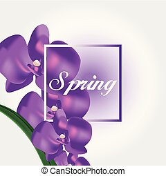 Spring Purple Orchid White Background Vector Image