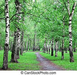 Spring rain in birch forest