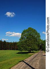 spring road around the tree