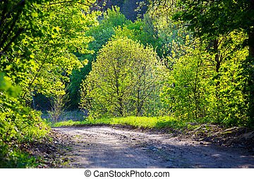spring road in the forest