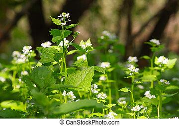 spring scene with nettle flower
