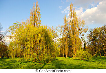 Spring scenery with few willows
