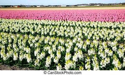 spring field on farm