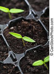 Spring seedling growing