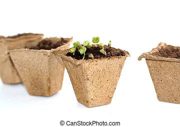 Spring seedlings for your small garden