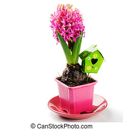 Spring setting with pink hyacinth