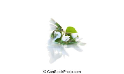 spring small white flowers isolated on white background