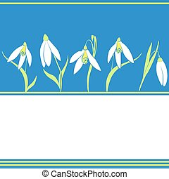 spring snowdrops flowers on the blue background