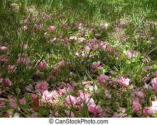 Spring Soil