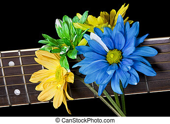 Multicolored daisies stuck into the strings of guitar neck, isolated on black background