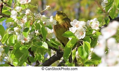 spring song of a beautiful bird among flowers