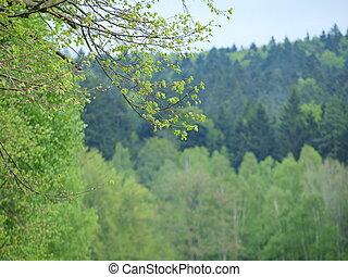 Spring, South Bohemia, Czech Republic