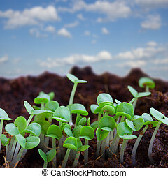 spring sprouts on blue sky - new beginning spring sprouts in...