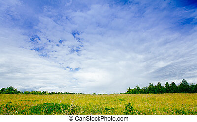 Spring summer background - rural road in green grass field meadow scenery lanscape with blue sky