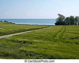 Spring summer green field sea background
