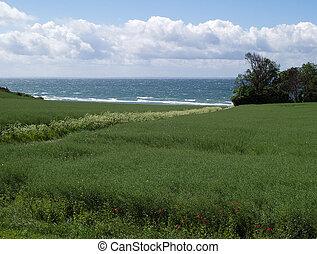 Spring summer green field sea backround