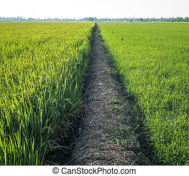 spring summer landscape. path in between green meadow field nature background
