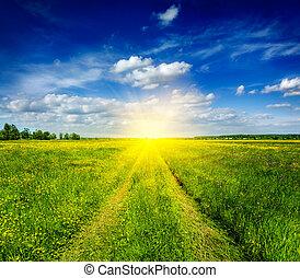Spring summer - rural road in green field scenery