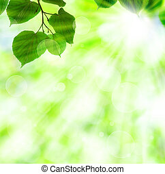 Spring sun beam with green leaves over shiny lights ...
