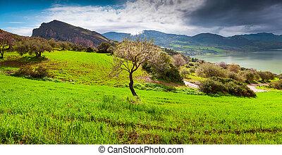 Spring sunny day in almond farm near lake Rosamarina