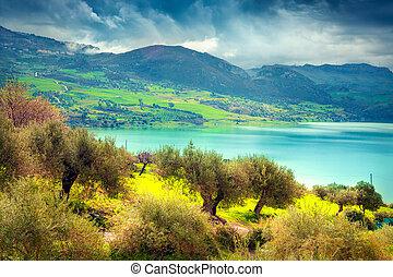 Spring sunny day in orange garden  near lake Rosamarina,