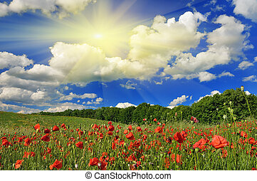 Spring sunny day on a green meadow with a red poppy . Spring landscape