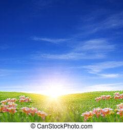 Spring Sunrise - Sunrise on grass field in spring time