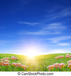 Sunrise on grass field in spring time