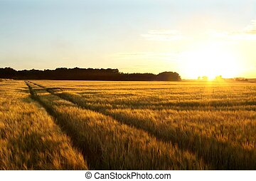 Sunset over the field with a dirt road leading into the forest