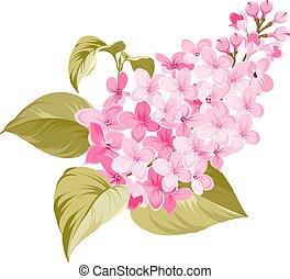 Spring syringa flower.