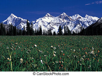 Spring - The spring in Tibet