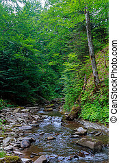 Spring time along the Little Pigeon River in the